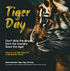 International Tiger Day Instagram Post