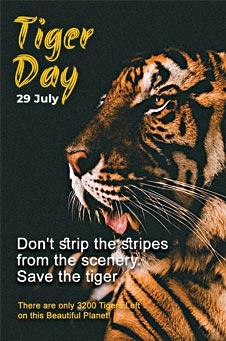 International Tiger Day Pinterest Pin