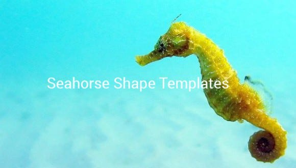 Seahorse Template Animal Templates