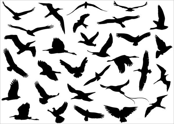 30 vector flying birds