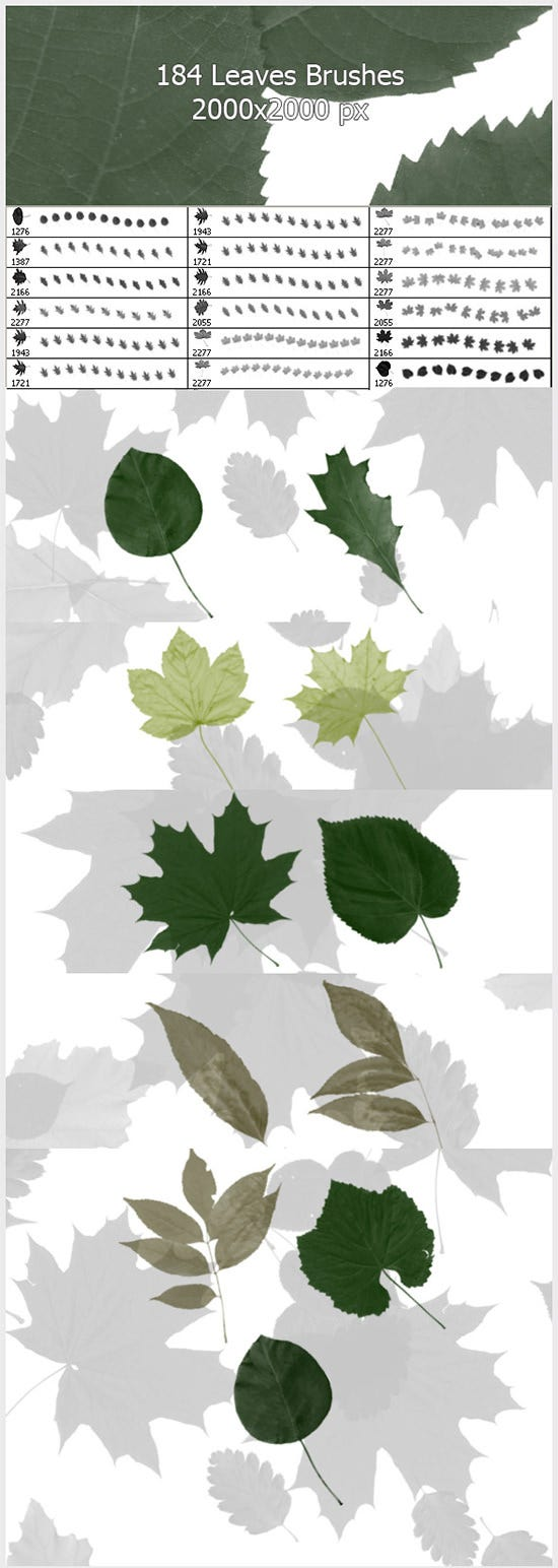 184 leaves brushes2