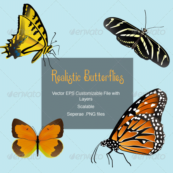 4 realistic butterfly vectors