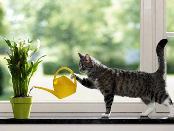 april fools day funny cat wallpapers download copy