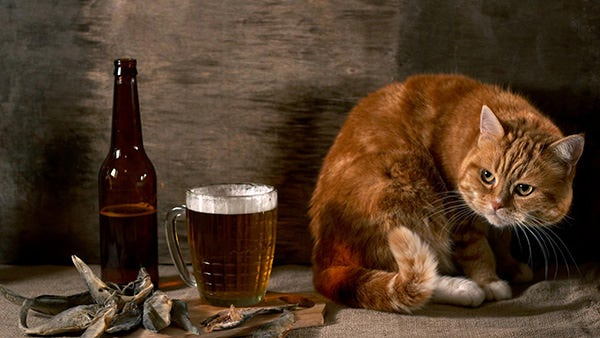 cat and beer funny animal wallpaper hd copy