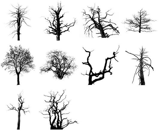 dead trees brush