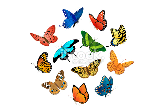 flying butterflies illustration