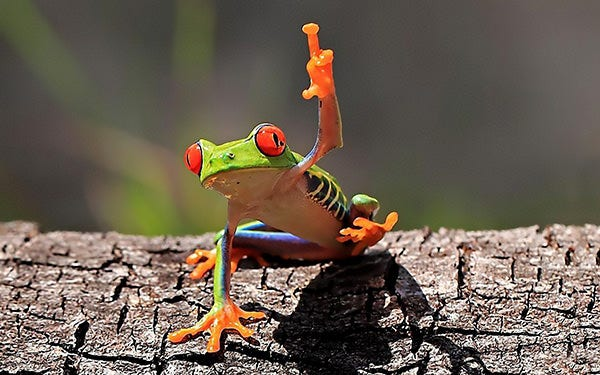 funny green frog images copy