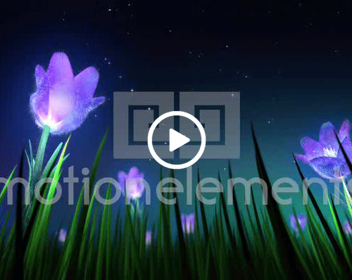 night flowers loop stock animation