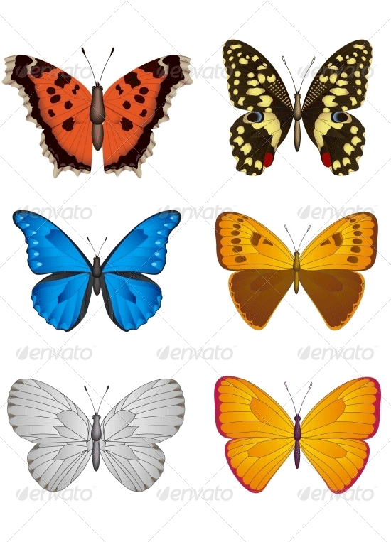 set of butterfly vector illustration