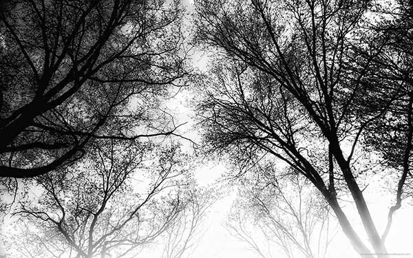 trees wallpaper copy