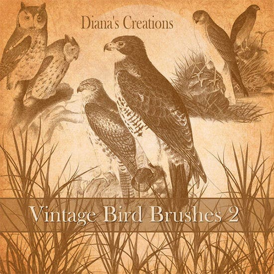 vintage bird brushes 21