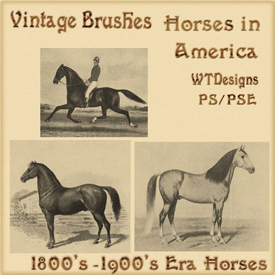 vintage brushes horses in america