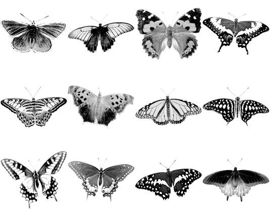 butterfly brushes iii