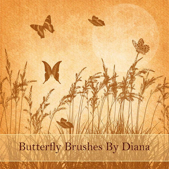 butterfly brushes new