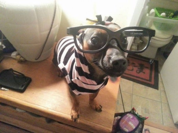 dogs in clothes funny wallpaper 600x450 copy