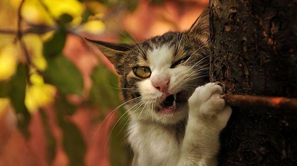 funny cat bite 1366x768 copy