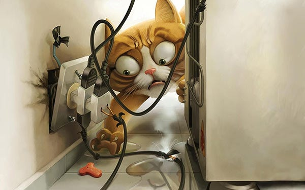 funny cat desktop wallpapers copy