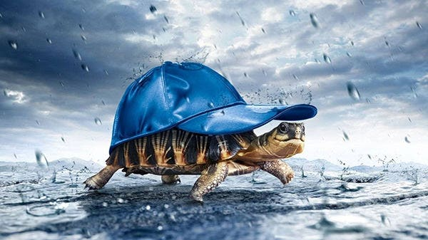 funny turtle funny wallpaper copy