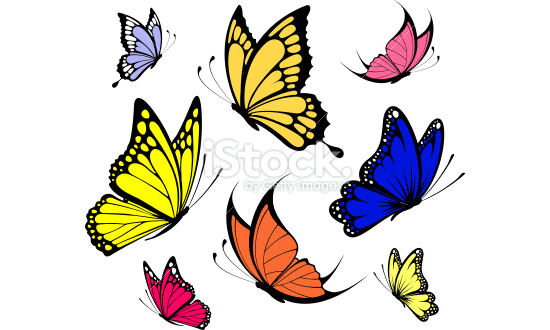 vector butterflies illustration