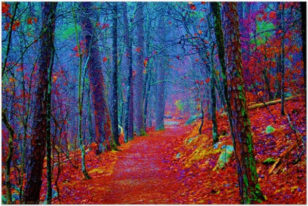 Black Light Forest Oil Painting Poster
