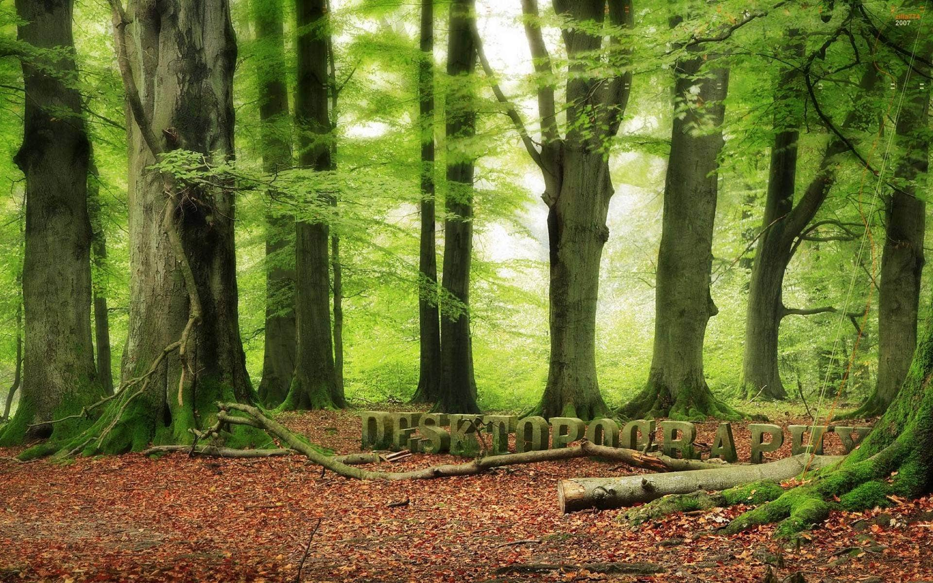 forest desktopography hd wallpaper 1920x1200