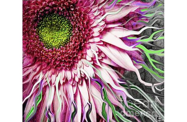 crazy daisy canvas print canvas art by christopher beikmann