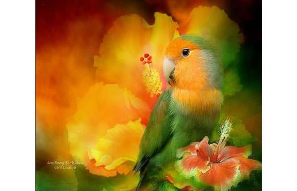 love among the hibiscus canvas print canvas art by carol cavalaris