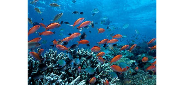 ocean fish coral reef canvas print wall art overstock