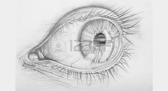 pencil drawn anatomy of a human eye