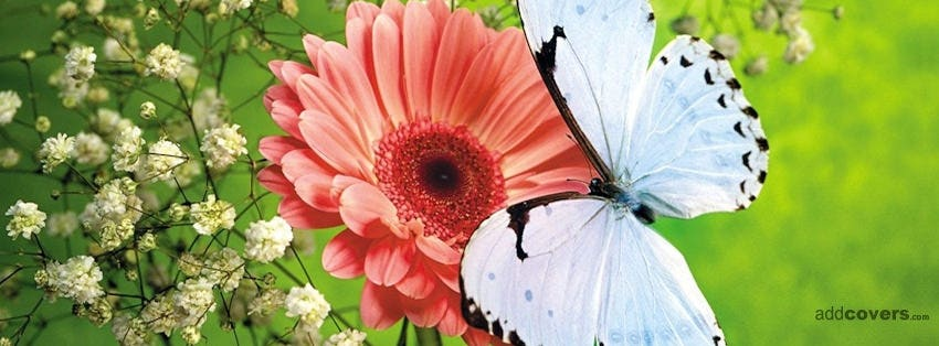 white butterfly flower facebook covers