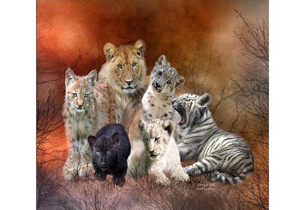 young and wild canvas print canvas art by carol cavalaris
