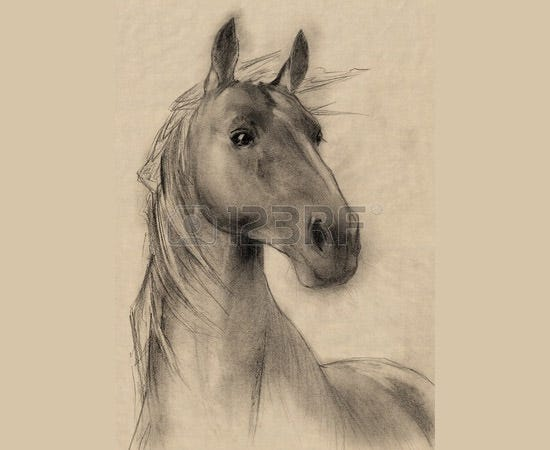 horse head pencil drawing