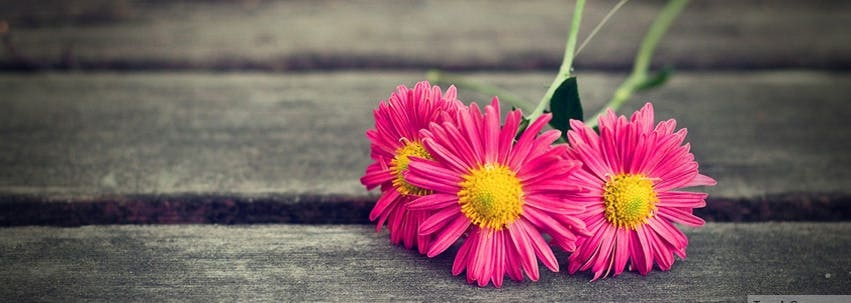 30  facebook cover pages  u0026 backgrounds