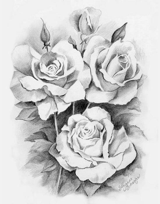 roses pencil drawing