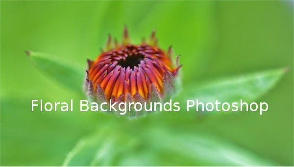 floral backgrounds photoshop1