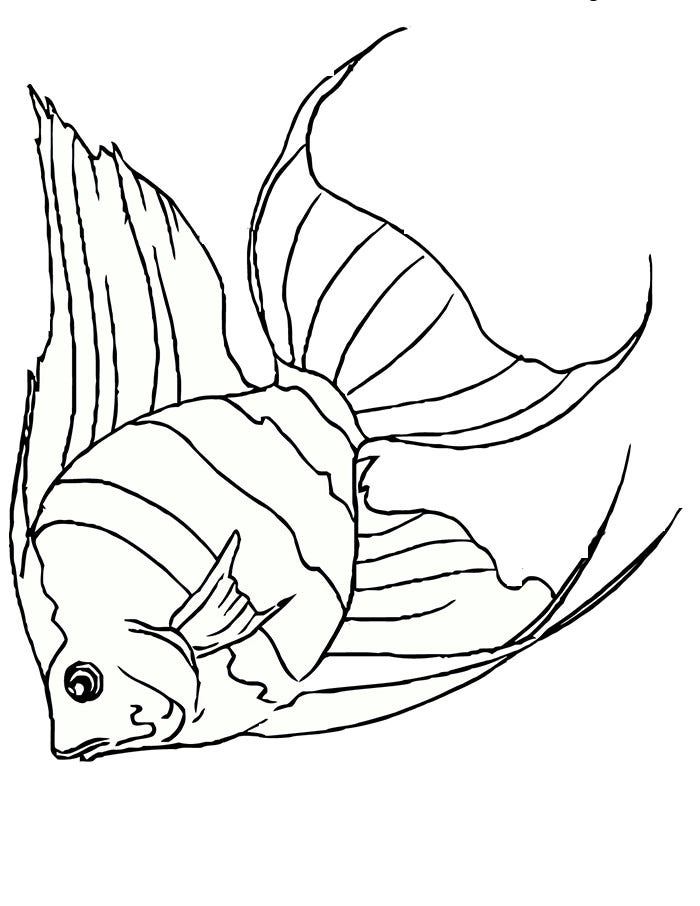 Colouring Pages Rainbow Fish : Fish outline template. 25 best ideas about rainbow fish template