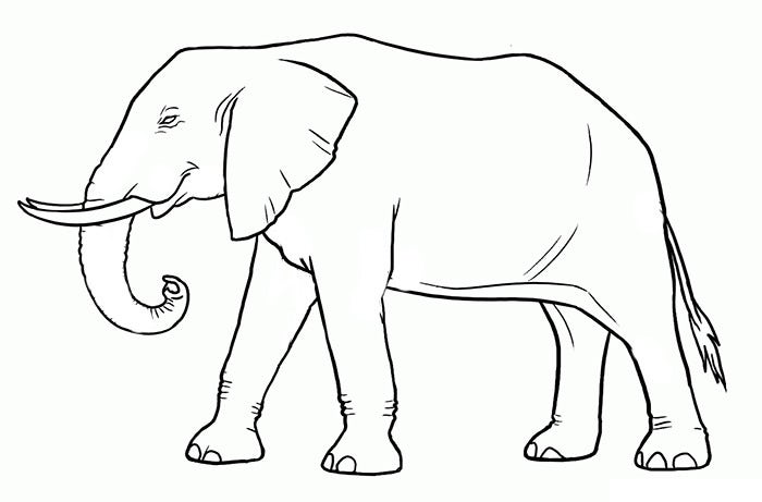 graphic regarding Elephant Outline Printable named Elephant Template - Animal Templates Cost-free Quality Templates