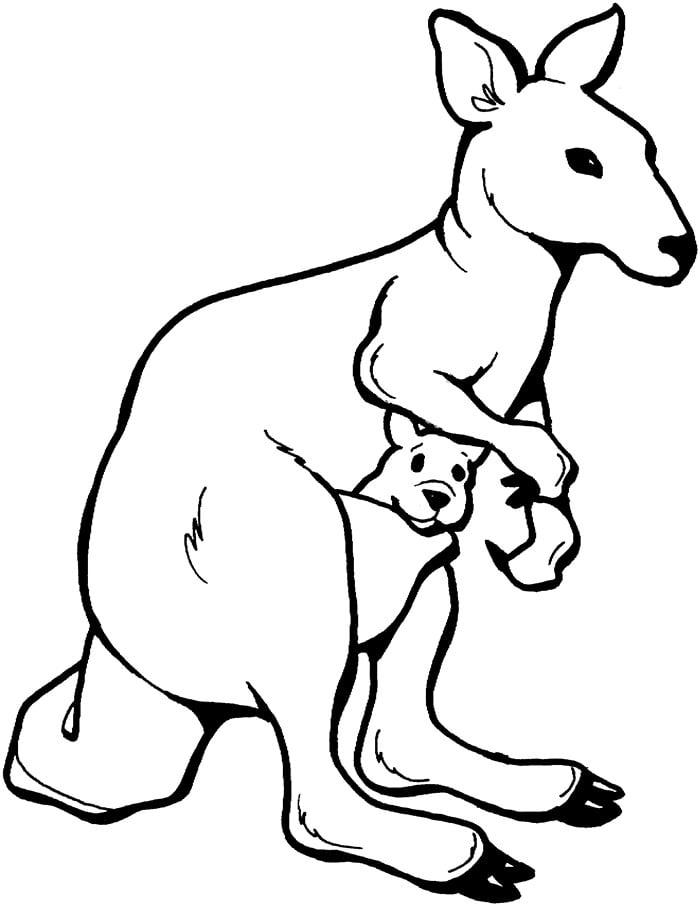 Coloring Template Animals Australian Animal Templates Free