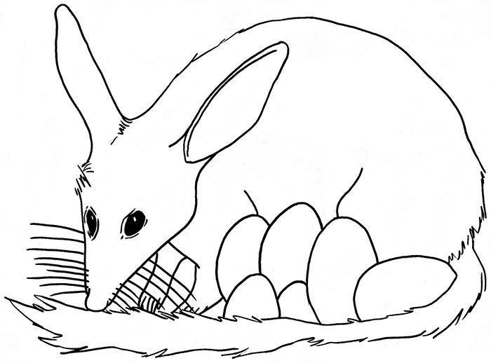 Cute Bilby Coloring Page Template