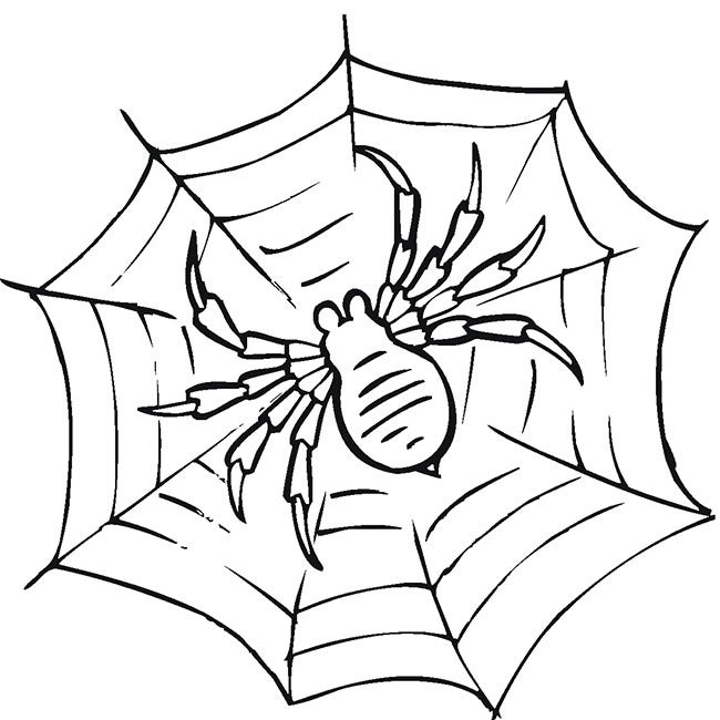 Spider In Black Line