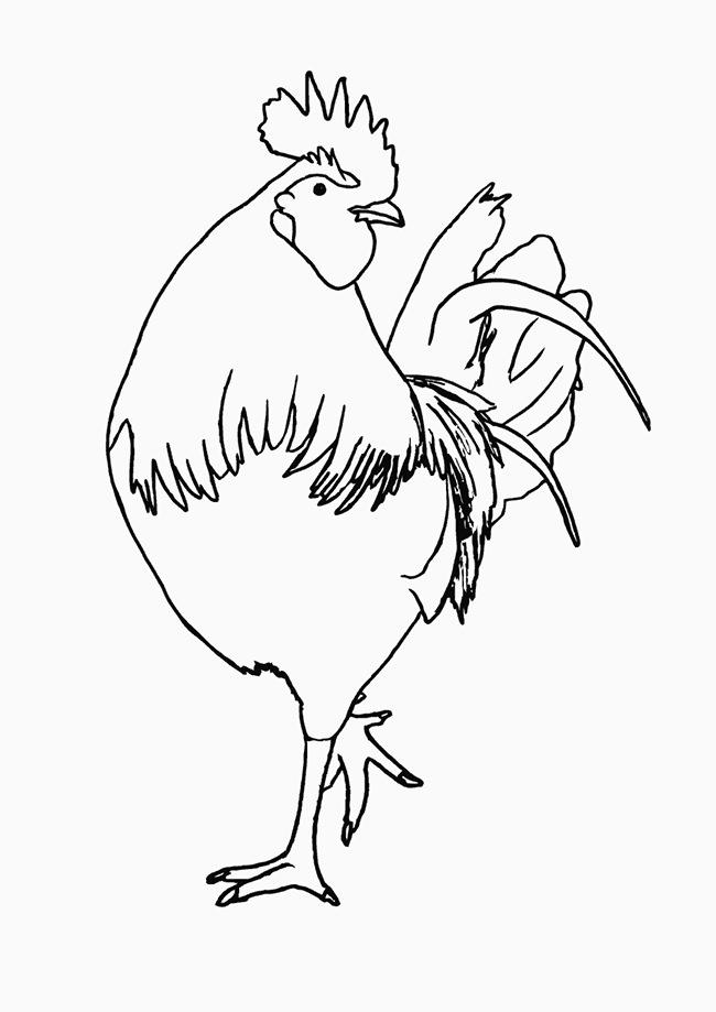 Chicken Template - Animal Templates | Free & Premium Templates