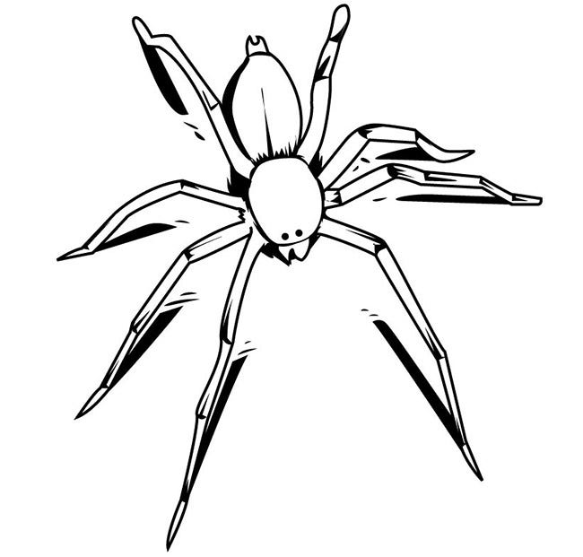 Spider shape template 55 crafts colouring pages free smart spider template maxwellsz