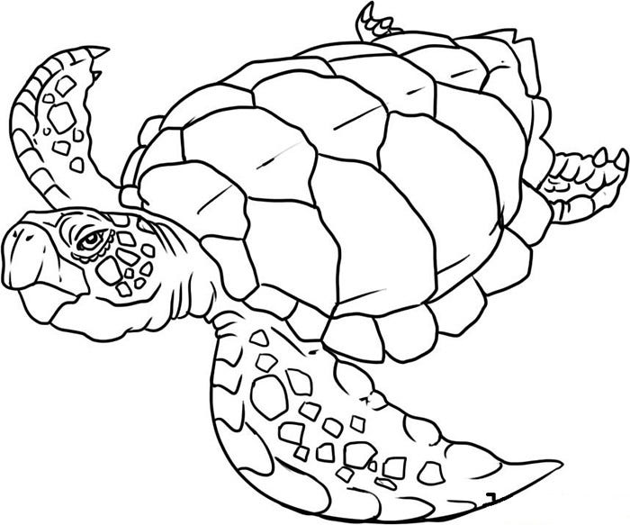 sea animals coloring page - Ocean Animals Coloring Pages