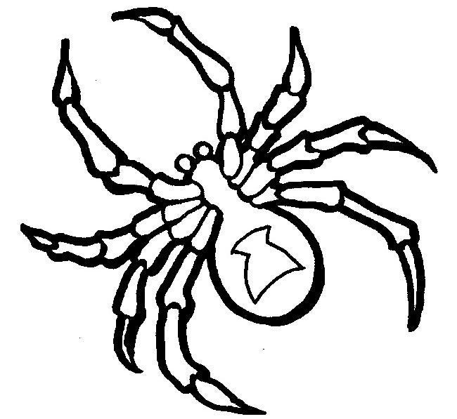 craft spider template - Black Widow Spider Coloring Pages