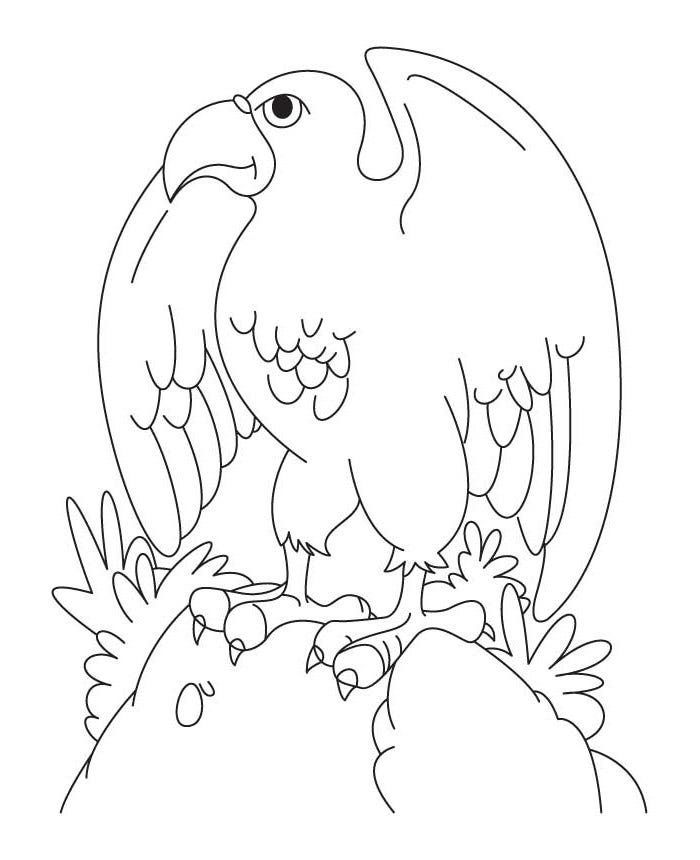 Eagles Coloring Pages  FirstSchool Preschool Activities
