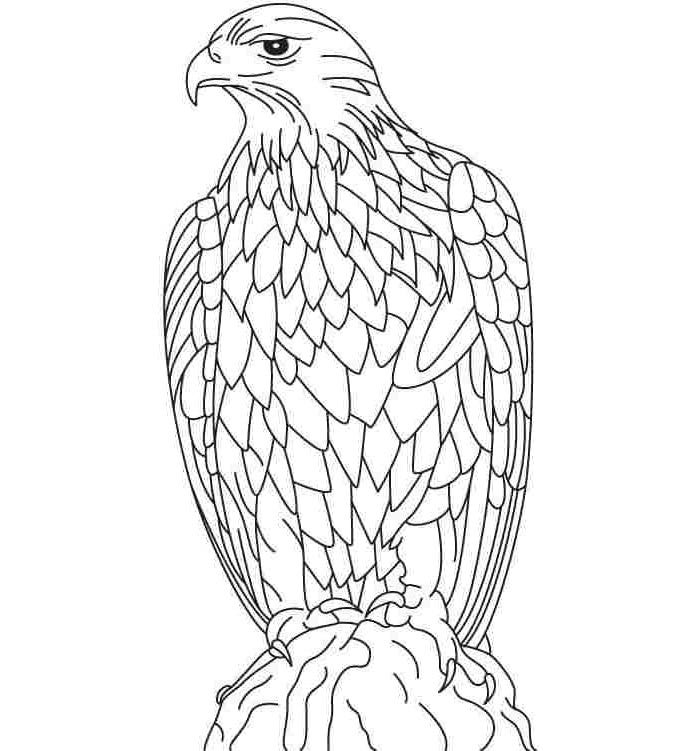 Eagle coloring page  Etsy