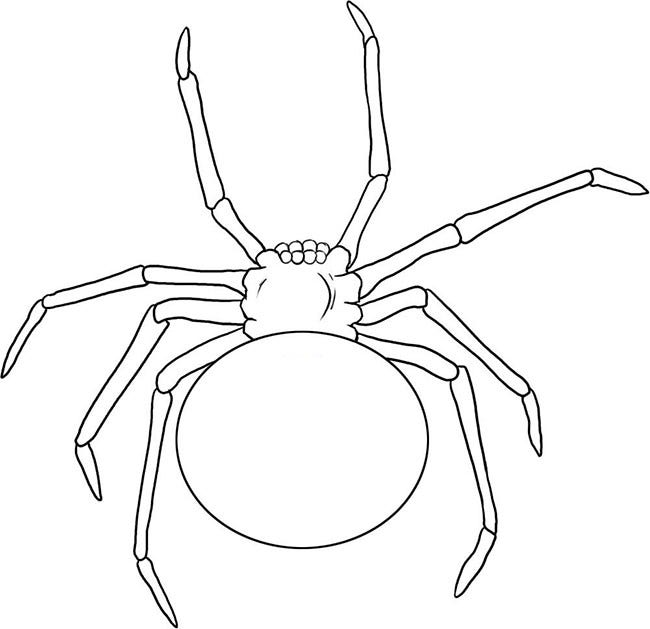 It's just a photo of Exceptional Spider Template Printable