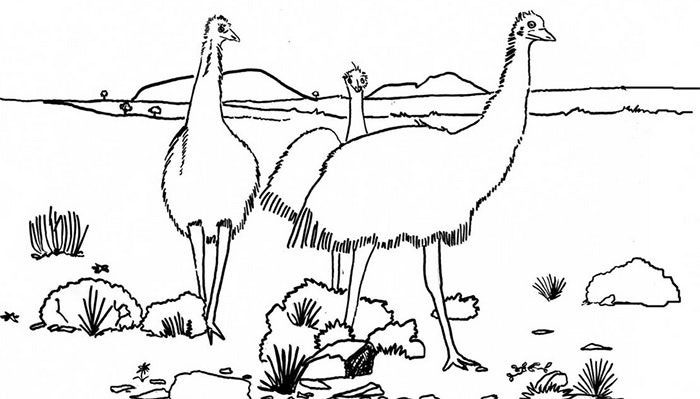australian animals coloring page - Animal Picture For Colouring