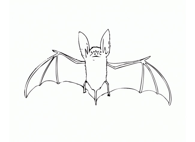 bat template physic minimalistics co