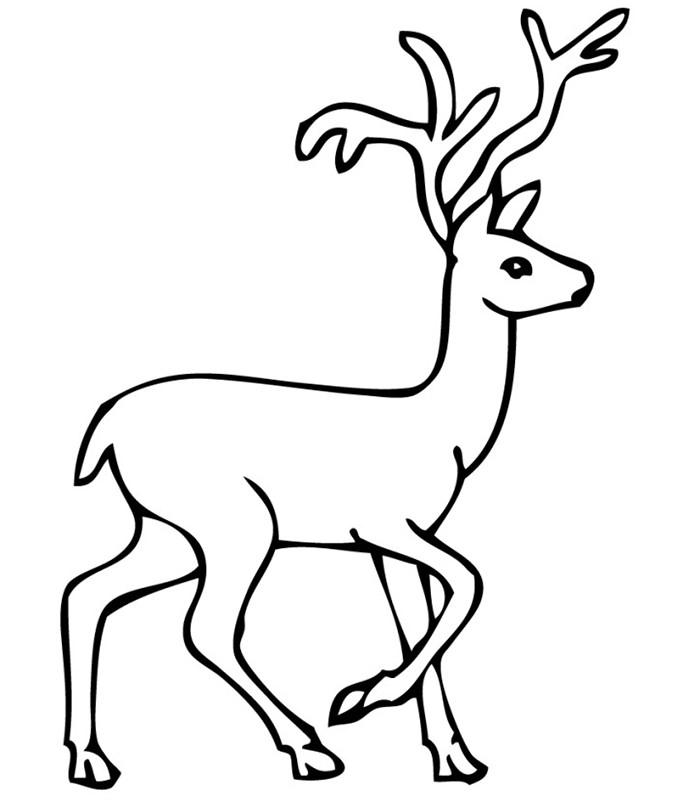 Reindeer Template - Animal Templates | Free & Premium ...